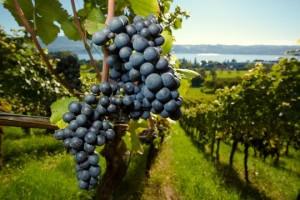 Weinreise nach Bordeaux